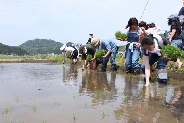 香り米プロジェクト 一斉に田植え